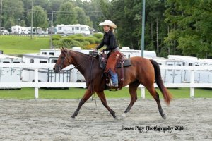 rose ww trot twha 8.18
